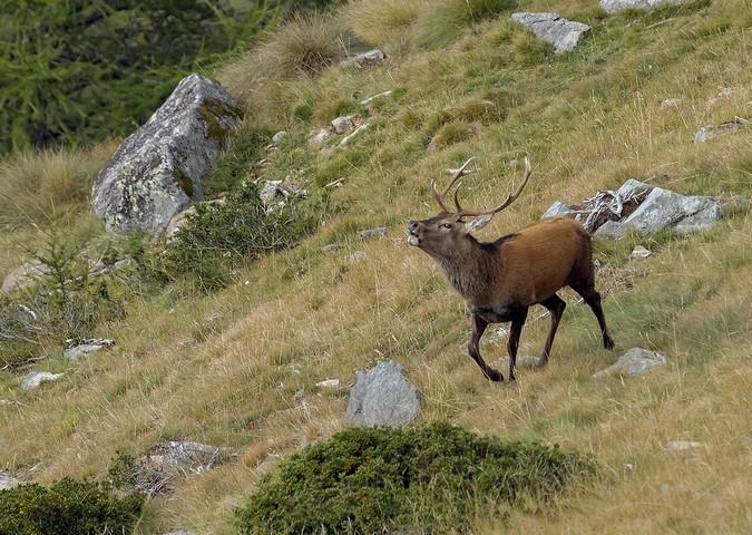 Ultra Trail, cervi ed husky: gli appuntamenti autunnali di Pontedilegno-Tonale