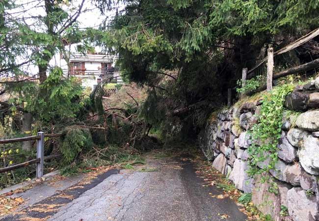 2,5 milioni di euro la sistemazione dei sentieri lombardi colpiti dalla Tempesta Vaia