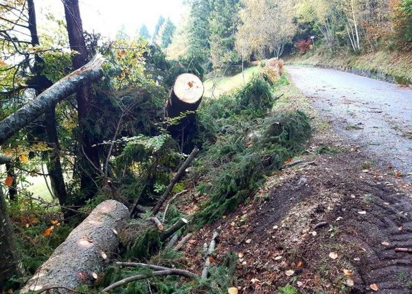 Una cinquantina di alberi sradicati dal maltempo di domenica notte