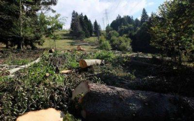 Legambiente Basso Sebino denuncia i tagli di alberi in Val Palot
