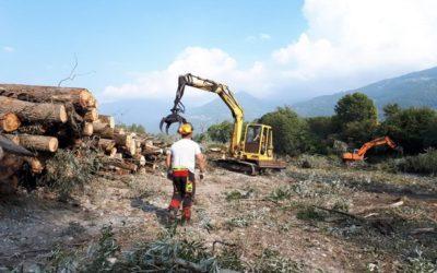 Pulizia tronchi e ramaglie per l'Oglio a Costa Volpino