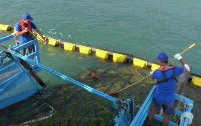 Clusane d'Iseo: al via le operazioni di sfalcio delle alghe nella zona di fronte al porto