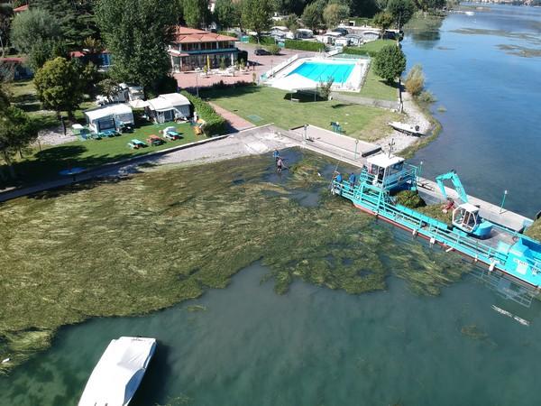 Lago d'Iseo, quasi 500 tonnellate di alghe raccolte in due mesi