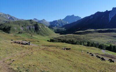 Gli investimenti dell'assessorato all'agricoltura della Comunità Montana di Vallecamonica per sostenere il territorio
