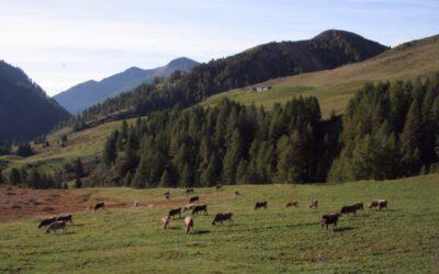 Lavori in corso sulla sp 669 del Gaver, ma gli allevatori camuni scalpitano per trasferirsi negli alpeggi
