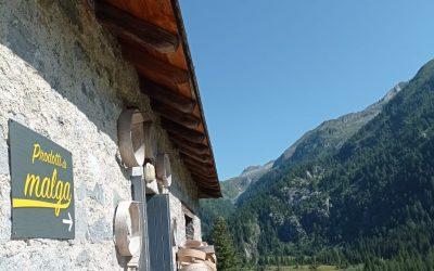 Una giornata in alpeggio con il Parco dell'Adamello per fare il punto su Sosalp